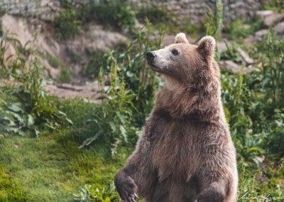 Polar Park - Bjørn